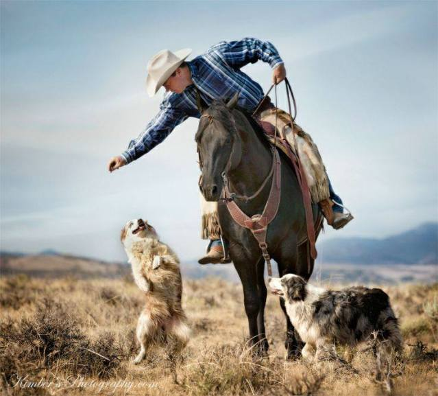 Horse & Dogs