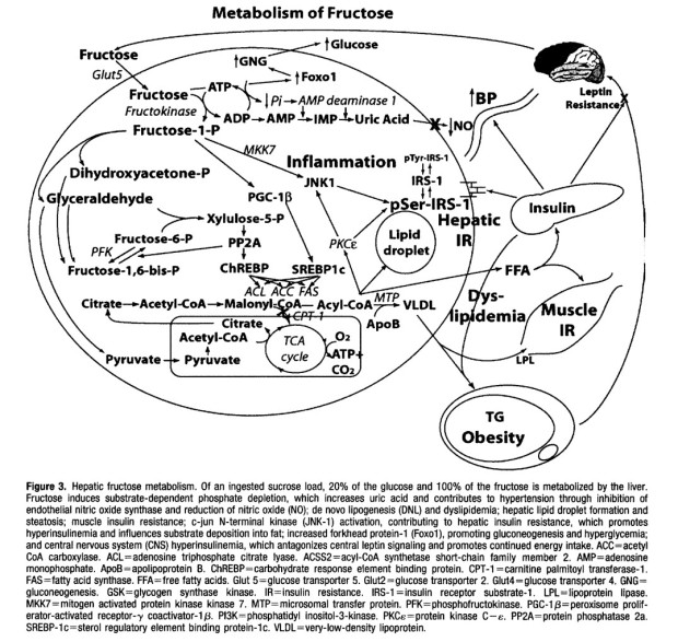 Metabolism of Fructose