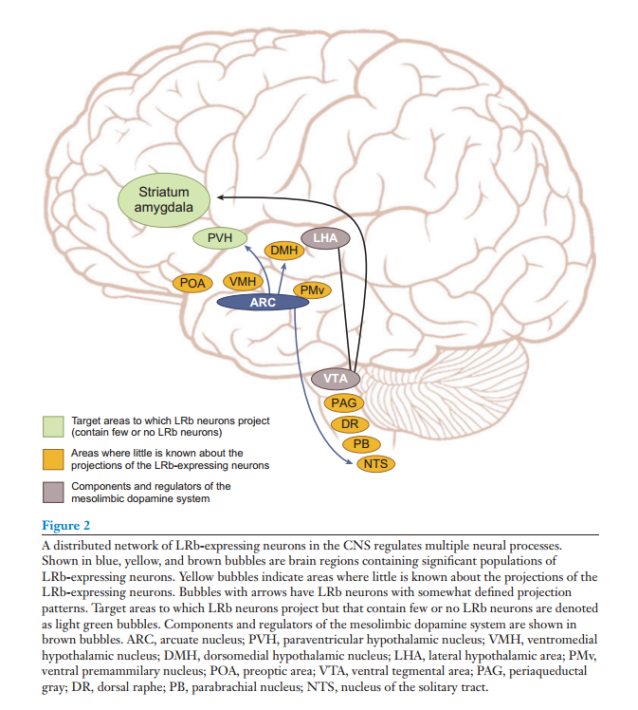 CNS Neural Pathways
