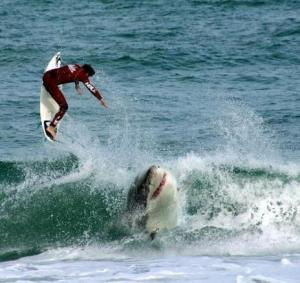 Man-vs-Shark_11