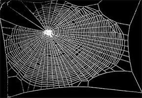 Spider Normal