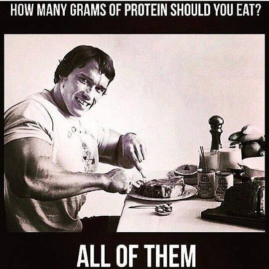 Schwarzenegger Protein